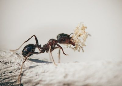 Carpet cleaning north east, ants