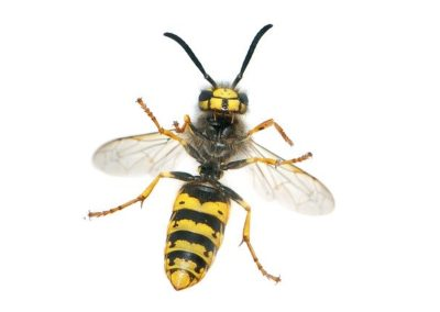 Carpet cleaning North Tyneside, wasps